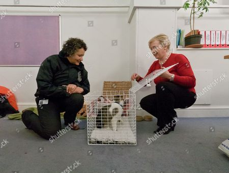 Kirsty Walker and Claire Horton release Larry into the Press Office of Downing Street