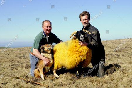 John Heard and son James with an orange sheep. England, Britain.