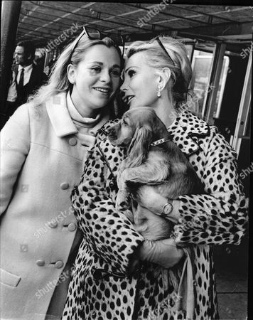 Actress Zsa Zsa Gabor Arrives At London Heathrow Airport Met By Her Daughter Francesca Hilton And Her Spaniel Puppy Dog ' Paul Mccartney'