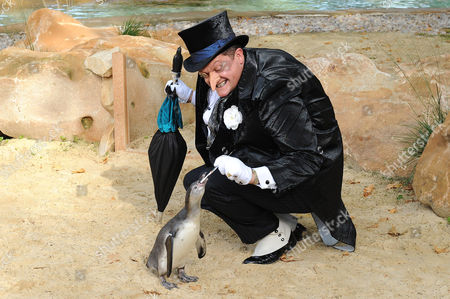 Stock Photo of Alex Giannini in costume as 'The Penguin', with penguins