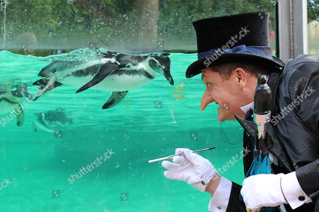 Editorial image of The Penguin from 'Batman Live' stage production meets London Zoo's penguins, London, Britain - 22 Aug 2011