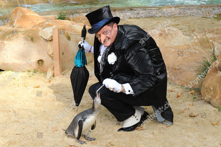 Stock Picture of Alex Giannini in costume as 'The Penguin', with penguins