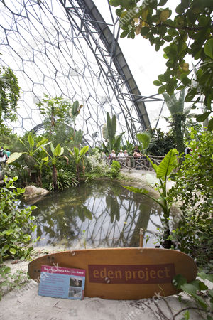The Rainforest Area at the Eden Project in Cornwall, England, Britain