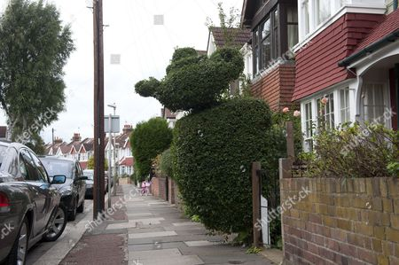 Stock Image of The Garden Hedge In Riverview Grove Chiswick West London Which Has Raised The Hackles Of The Local Authority See Richard Littlejohn Story  19910