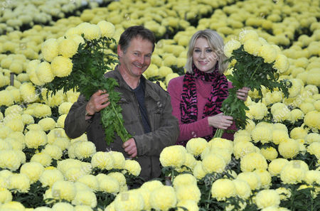 Mail Writer Ticky Hedley dent (pictured R) Visits One Of The Uk's Last Chrysanthemum Growers.  Grower Trevor Lawerence (l) On His Farm Near Holmes Chapel Cheshire.  Hedley dent 15/12/10