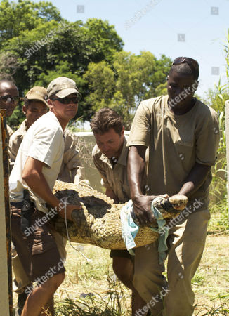 Steve Leonard helps in the relocation of five of the Parks crocodiles