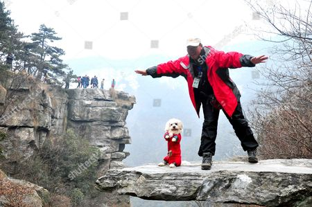 Dog Niu Niu stands on his hind legs on the protruding rock ledge