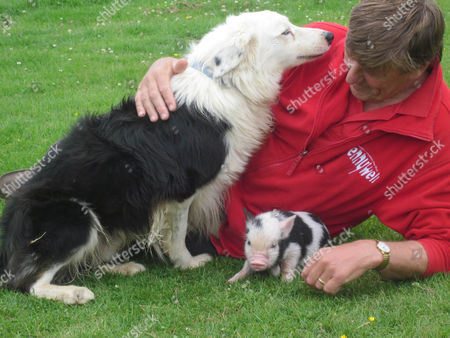 Pennywell Farm owner Chris Murray with sheep dog and Miniature Pig