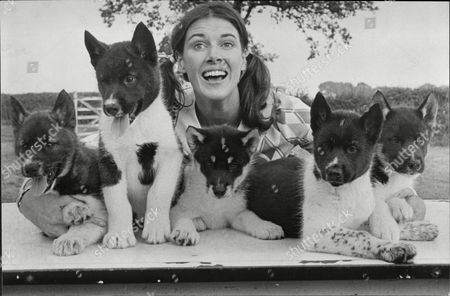 Stock Image of Magpie Presenter Susan Stranks With Five Husky Puppies