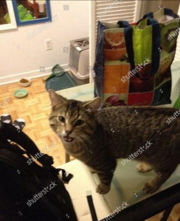 Image posted on his Weibo site by Lin Jun of his cat 'Brother Andy'