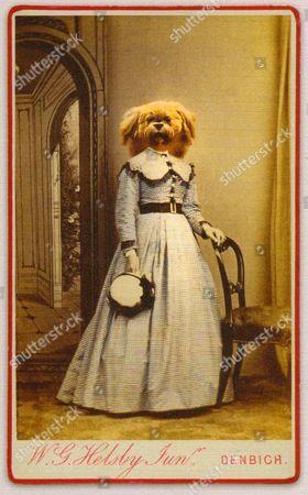 A Charlotte Cory 'Vistorian', titled 'Denbigh Dog'