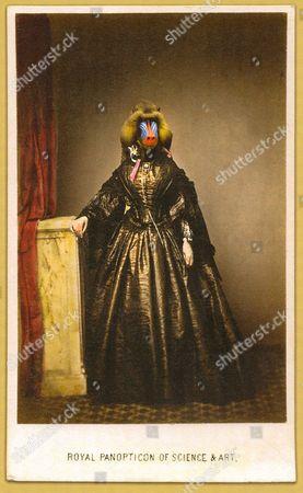 A Charlotte Cory 'Vistorian', titled 'Royal Panopticon'