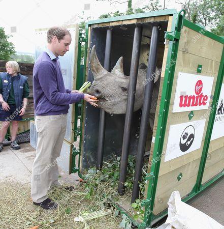 Editorial photo of Rhino Translocation Project, Port Lympne Wild Animal Park, Britain - Jun 2012