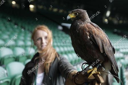 Bird handler Imogen Davis is reunited with Rufus the Hawk on Centre Court