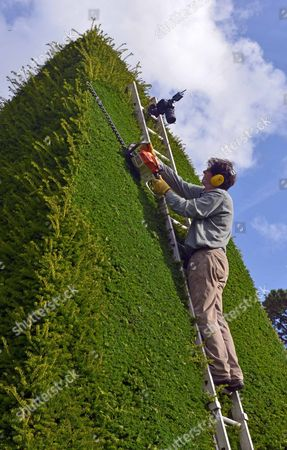 Editorial photo of Patrick Cooke, who spends two weeks trimming 12, 30ft high yew tree pyramids at Athelhampton House, Dorset, Britain - 04 Oct 2012