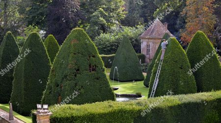 Stock Photo of Patrick Cooke up a ladder trimming one of the 30ft high yew tree pyramids