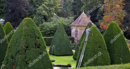 Patrick Cooke up a ladder trimming one of the 30ft high yew tree pyramids