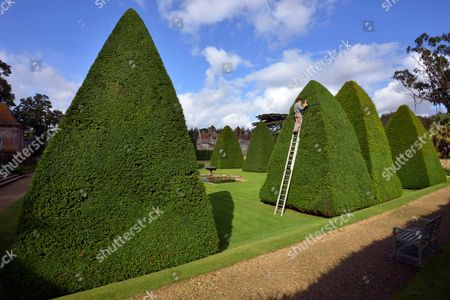 Editorial image of Patrick Cooke, who spends two weeks trimming 12, 30ft high yew tree pyramids at Athelhampton House, Dorset, Britain - 04 Oct 2012