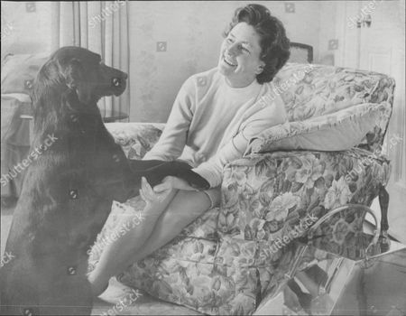 Baroness Lucy Faulkner Wife Of Politician And Prime Minister Of Northern Ireland Baron Faulkner At Home With Her Labrador 'joe' Arthur Brian Faulkner Baron Faulkner Of Downpatrick Pc (18 February 1921 A 3 March 1977) Was The Sixth And Last Prime Minister Of Northern Ireland From March 1971 Until His Resignation In March 1972. He Was Also The Chief Executive Of The Short-lived Northern Ireland Executive During The First Half Of 1974. Faulkner Married Lucy Forsythe A Graduate Of Trinity College Dublin In 1951. They Met Through Their Common Interests In Politics And Hunting. She Was Equally Suited To A Political Partnership Having Had A Career In Journalism With The Belfast Telegraph And Was Secretary To The Northern Ireland Prime Minister Lord Brookeborough When They Met. Together They Had Three Children - A Daughter And Two Sons. Lord Faulkner A Keen Huntsman Died On 3 March 1977 At The Age Of 56 Following A Riding Accident Whilst Hunting With The Down Staghounds Near Saintfield County Down. Faulkner Had Been Riding At Full Gallop Along A Narrow Country Road When His Horse Cannonball Bolted And Collided With A Car. Faulkner Was Thrown Off And Killed Instantly.