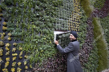 Kulveer Ranger The Mayor For London's Director Of The Environment Unveils A Planted Green Wall At Edgware Road Tube Station To Deliver Cleaner Air Picture By Glenn Copus.