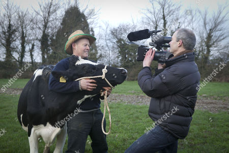Farmer Steve Hook - 'The Moo Man' with Kitty one of his herd with documentary maker Andy Heathcote