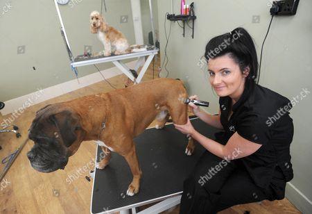 Amanda Marshall giving boxer dog Ky a paw print 'tattoo'