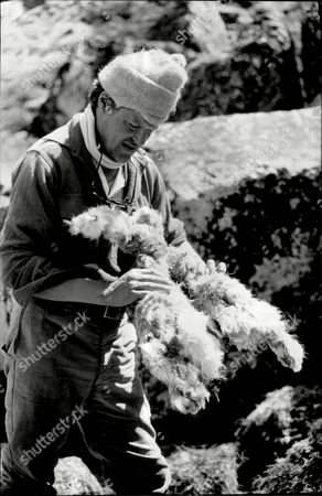 1988 Mail On Sunday Yeti Expedition In Tibet Lead By Mountaineer Chris Bonington In Search Of The Yeti Pictured Dr Charles Clarke Examines Sheep Remains.