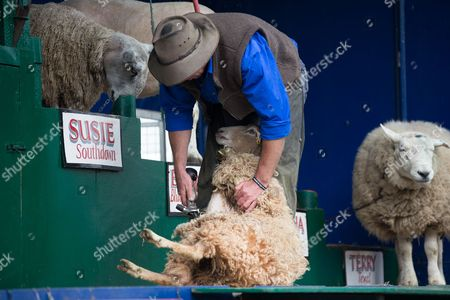 Stuart Barnes from Australia demonstrates sheep shearing.