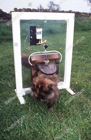 FLEA SPRAY CAT FLAP
