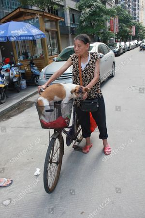 Editorial picture of Pet dog survives meat cleaver blow to the head, Zhangzhou, China - 16 Jun 2013