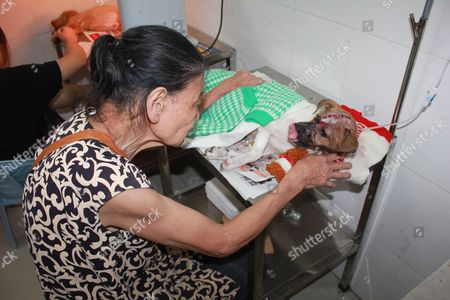 Editorial photo of Pet dog survives meat cleaver blow to the head, Zhangzhou, China - 16 Jun 2013