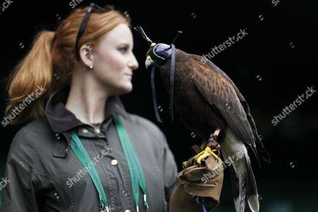 Editorial photo of Wimbledon Tennis Championships, London, Britain  - 28 Jun 2013