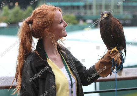 Stock Image of Bird Handler Imogen Davis With Rufus The Hawk On Centre Court On His Return.