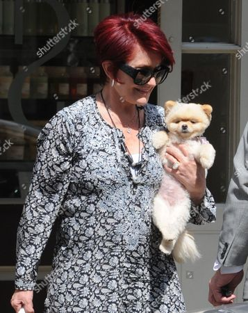Stock Image of Sharon Osbourne and her Pomeranian dog, Mr Chips leaving the Daniel Galvin Hair salon
