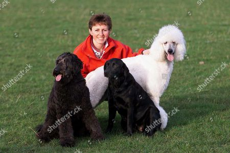 JESS THE LABRADOODLE (CENTRE) WITH ITS LABRADOR MOTHER PUDDY AND POODLE POLO