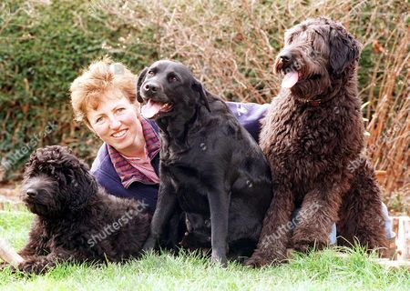 Editorial photo of MARY ROOK FROM PORLOCK, SOMERSET WITH HER LABRADOR PUPPY AND HER LABRADOODLES JESS (R) AND 4 MONTH OLD OZZIE WHO ARE A RARE CROSSBREED BETWEEN A LABRADOR AND A POODLE, BRITAIN - 1999