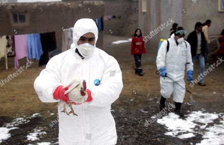 Local Government Workers Start The Slaughter Of Millions Of Chickens In The Eastern Turkish Town Of Dogubeyazit Where Four Children Were The First Victims Of Bird Flu. The First Death Of Mehmet Kocyigit (14)was Followed By The Deaths Of His Two Sisters. Their Youngest Brother Hasan Ali Was The Only Sibling To Survive. See Fiona Barton Story.