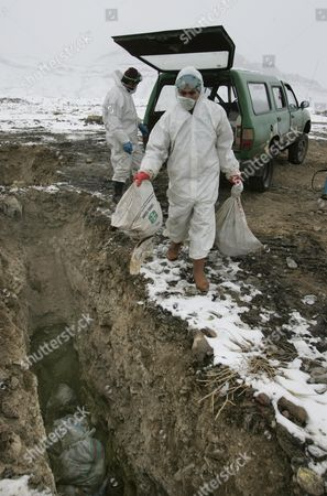 Turkish Health Workers In Protective Clothing Discard Sacks Of Live Chickens Collected From The Nearby Eastern Turkish Town Of Dogubeyazit Which Has Seen The First Deaths From Bird Flu. Also Thrown To Be Buried Alive Were Two Budgies. See Fiona Barton Story.