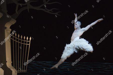 Jonathan Ollivier as The Swan