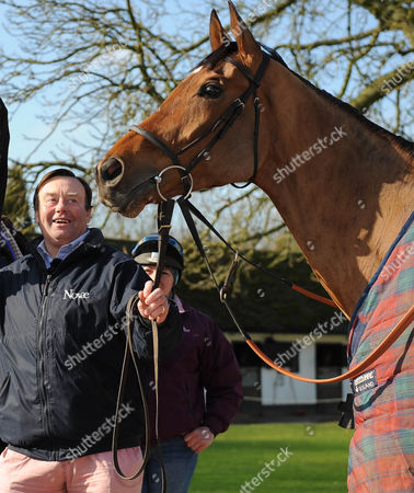Cheltenham Festival Preview. Nick Henderson Lambourn Stables Pictured Nicky Henderson With Racehorse Binocular.