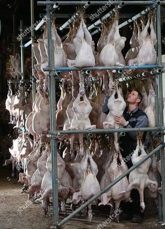 Stock Photo of Steve Slade with plucked Christmas turkeys