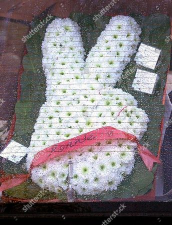 Flowers in the shape of a v-sign