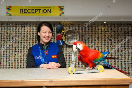Scarlet macaw Tracey rides a scooter as Amber Dixon looks on