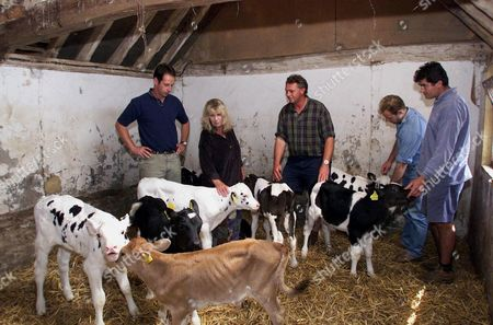 Editorial image of SOMERSET FARMERS WHO DELIVERED 43 FRIESIAN BULLS CALVES TO CARLA LANE'S ANIMAL SANCTUARY, SUSSEX, BRITAIN - DEC 2001