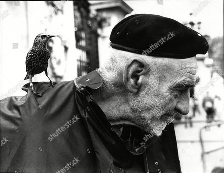 Charles Lyons (69) A Buckingham Palace Gardener Who Feeds The Wild Birds Near The Palace In His Spare Time.