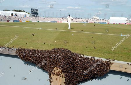 Bees invade the Rose Bowl home of Hampshire cricket club.Hampshire are playing Leicestershire. Leicestershire's Devon Malcolm looks on from the boundary.