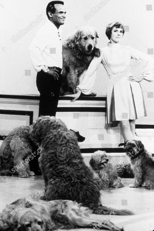 FILM STILLS OF 'TV SPECIAL' WITH 1970, JULIE ANDREWS, ANIMALS (WITH ACTORS), HARRY BELAFONTE, DOG IN 1970