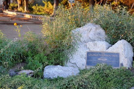 The location of the tree planted in memory of George Harrison before it died