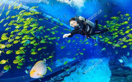 Jiang Nan swimming in a Durrell Babbs at the Changlong Aquarium