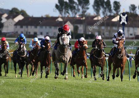 DOMINIC CORK Ridden by Fergal Lynch wins at Ayr